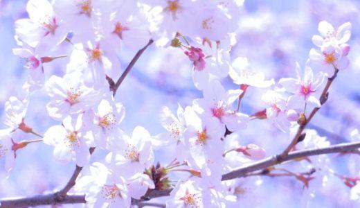 桜の写真をカンタンキレイに撮る3つのポイント:スマホ・ミラーレス共通