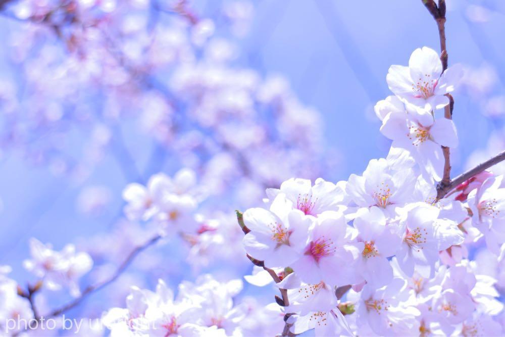 日本の季節を感じてみる【4月4日 清明】