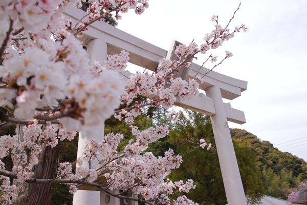 ミラーラレス一眼:EOS Mで撮った桜の写真まとめ 2014